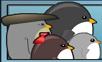 飛天企鵝2